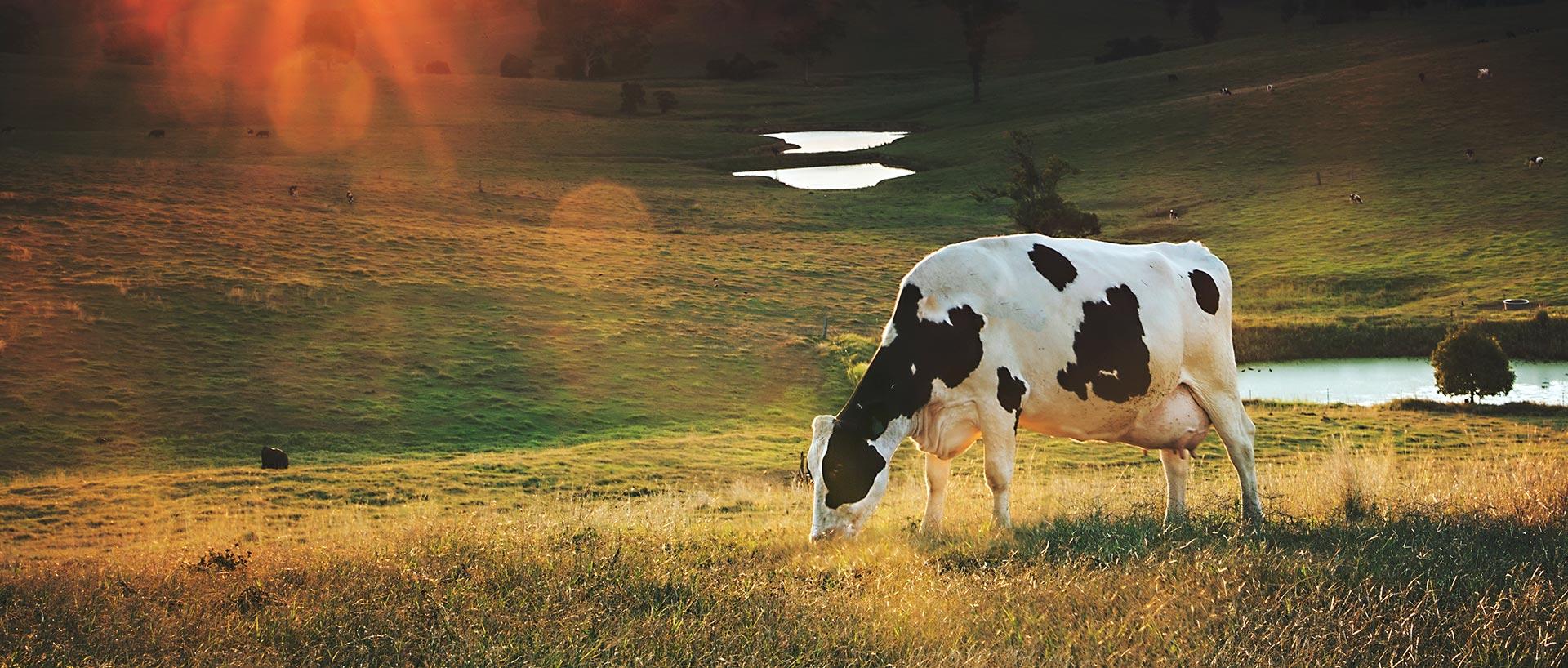 Gleesons Butchers Grass Land